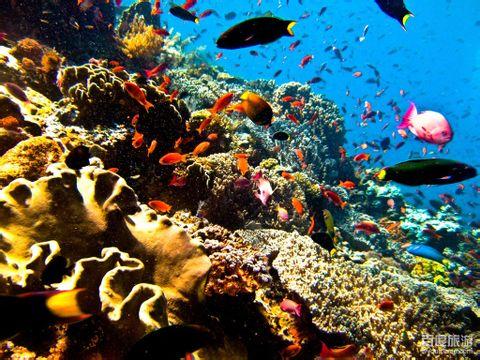 巴厘岛常规游旅游